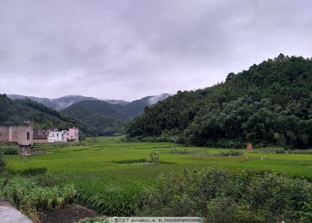 田野 田 农田 稻田 山 树林 竹林 田地 乡村田野 自然景观 摄影 自然