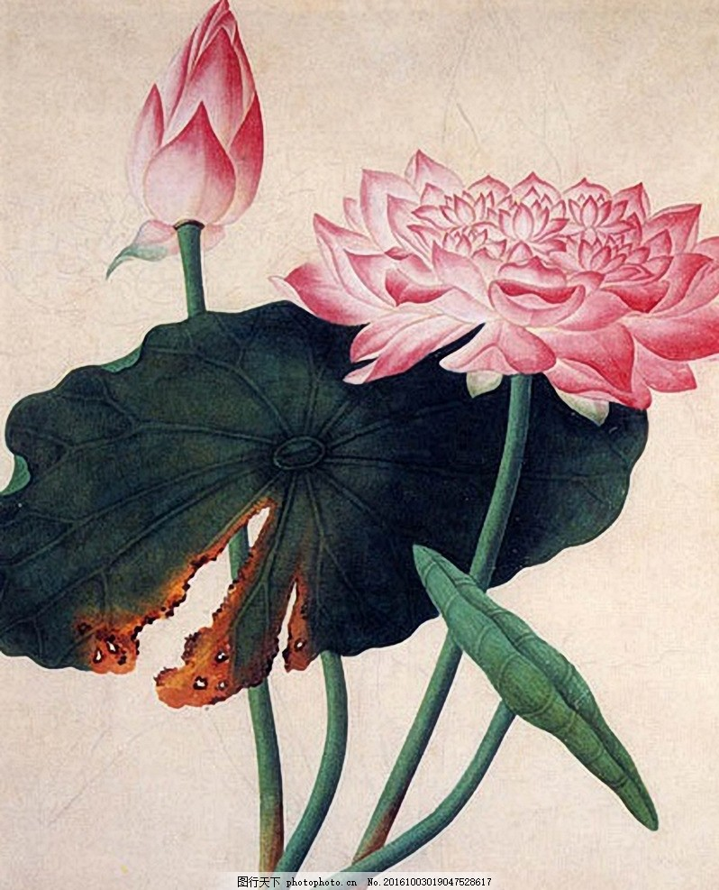 中国风工笔莲花 工笔画 花纹 摄影 后期