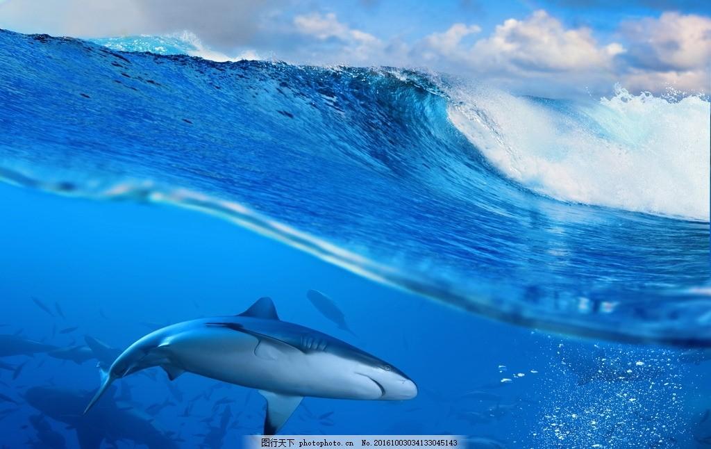 壁纸 动物 海洋动物 桌面 1024_646