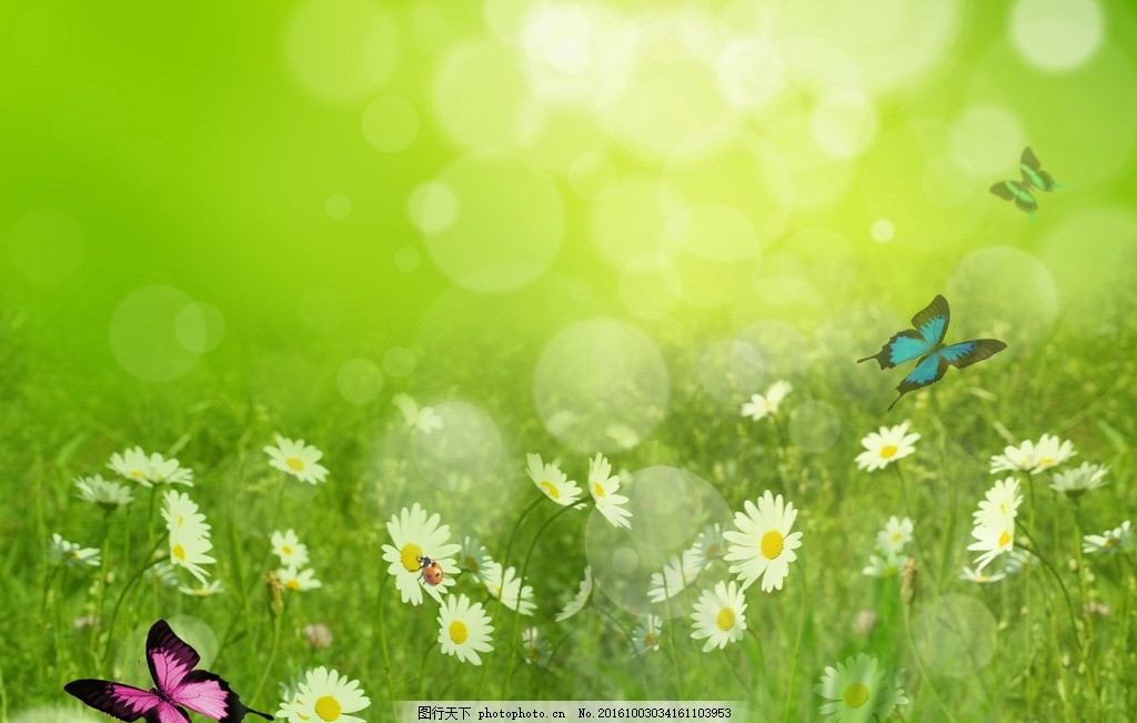 绿色背景 唯美 唯美背景 唯美绿色背景 小花背景 小草背景 唯美小花