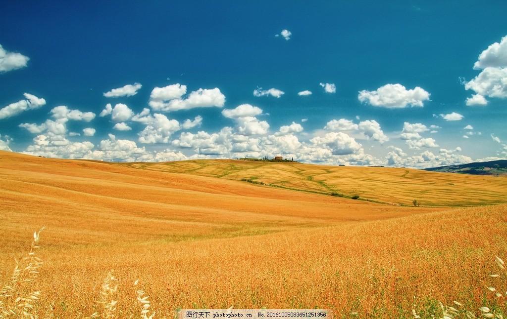 秋天草原 蓝天白云 天空 晴空 黄色草原 风景 美景 大自然 摄影