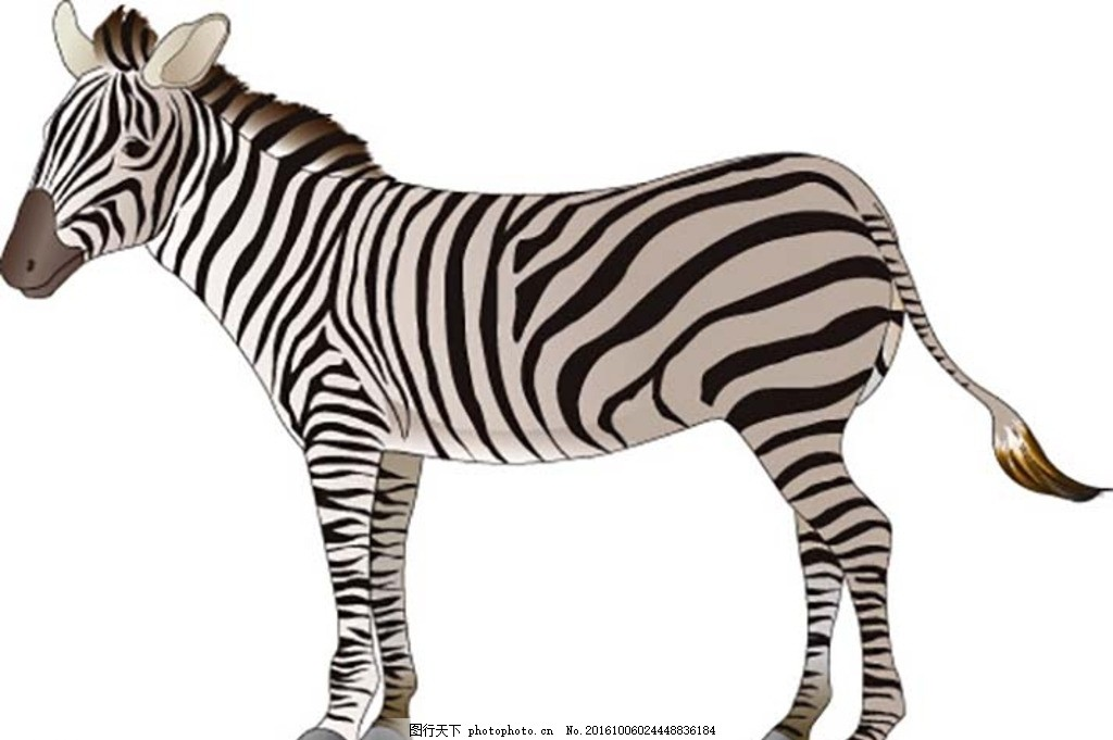 动物黑白剪影 动物剪影 黑白剪影 生物世界 动物世界 素材 设计 生物