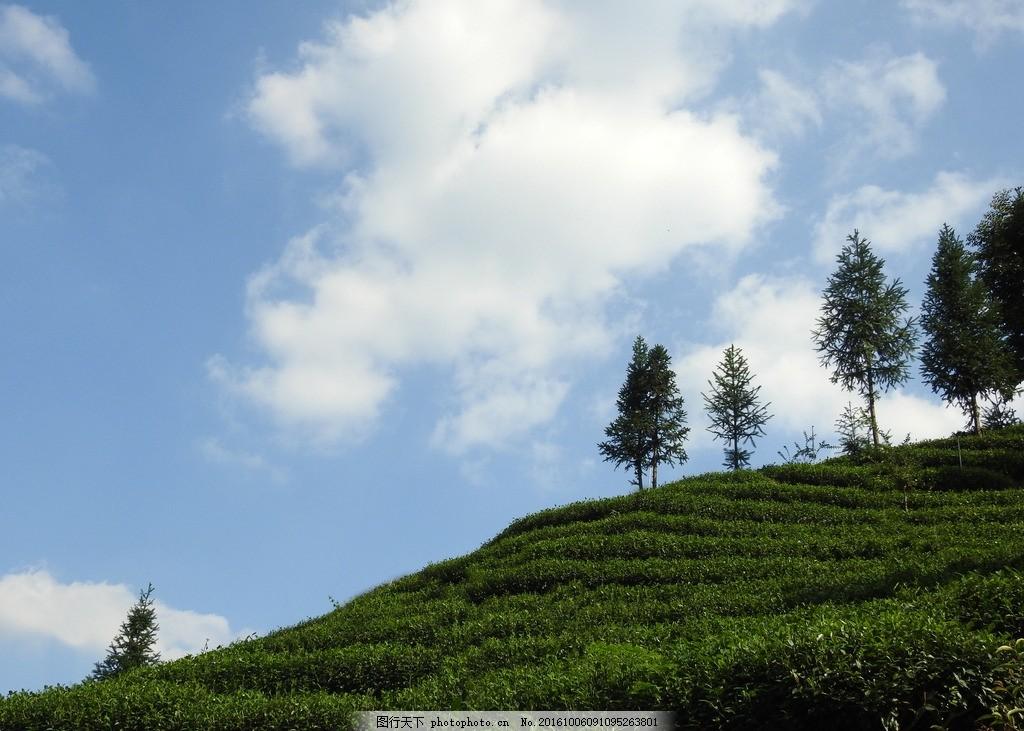 蓝天白云 蓝天 白云 茶山 茶 绿色茶园 摄影 自然景观 田园风光 300