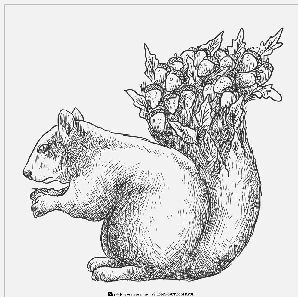 手绘松鼠的尾巴 自然 动物 绘制 森林 叶 绘画 抽纱 野生 艺术