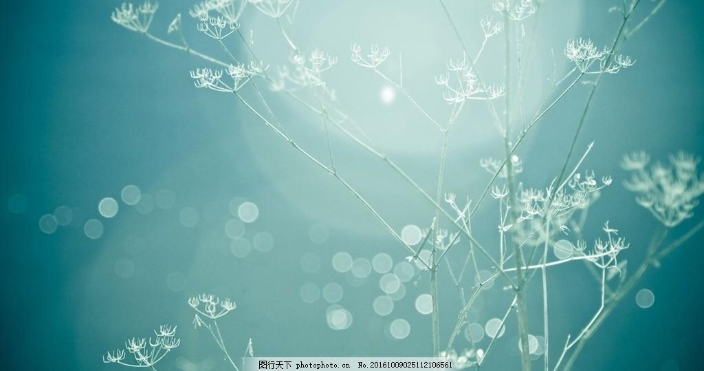 花朵绿色屏保 风景 高清摄影 大自然 桌面 屏保 绿色      摄影 生物