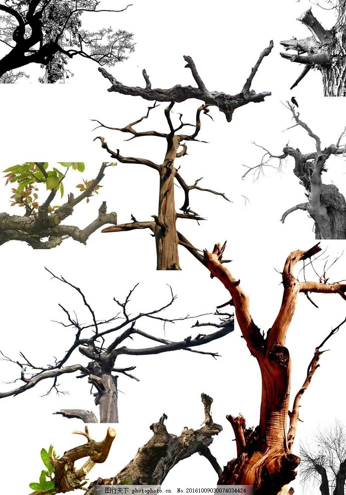 枯树枝 植物素材 植物造景 树枝 树枝剪影 设计 广告设计 海报设计