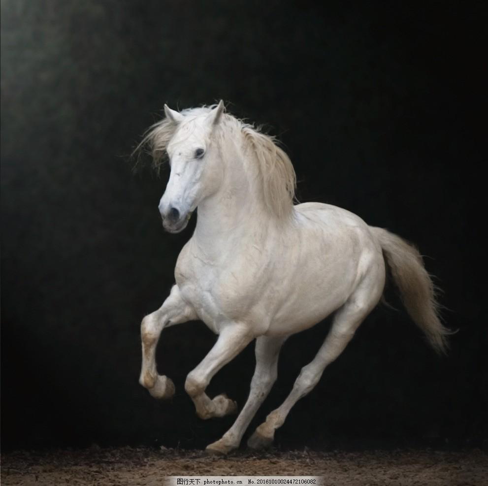 奔跑      白色 黑色 白色的马 奔跑的马 设计 生物世界 野生动物 300
