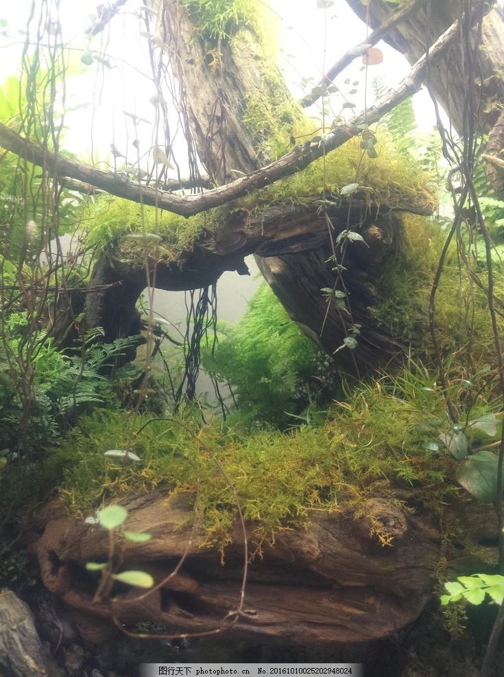 热带雨林 热带 雨林 盆景 微景观 古树 摄影 生物世界 树木树叶 72dpi
