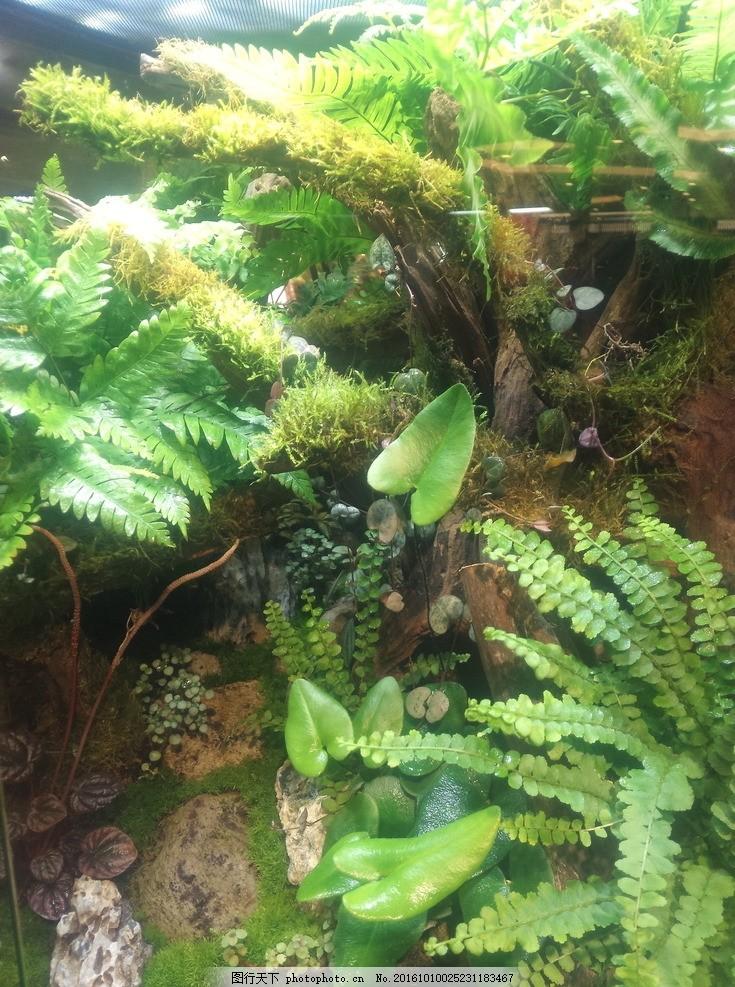 热带雨林 热带 雨林 树林 树木 绿叶 摄影 生物世界 树木树叶 72dpi