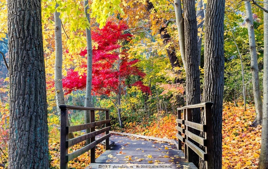 黄色背景 风景 秋天景色 秋天风景 秋天树林 秋天树叶 枫树 枫叶 金秋