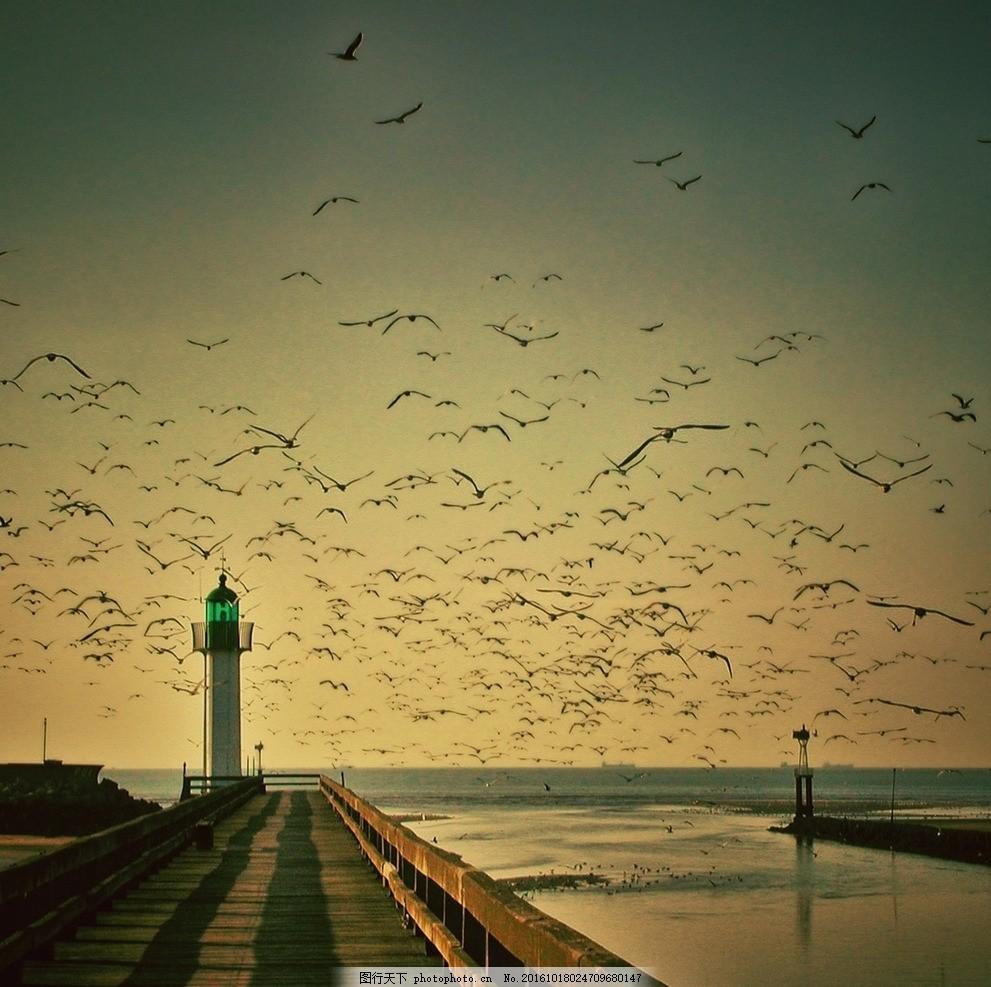 成群海鸥 海鸥 灯塔 天空 码头 大海 夕阳 摄影 生物世界 鸟类 72dpi