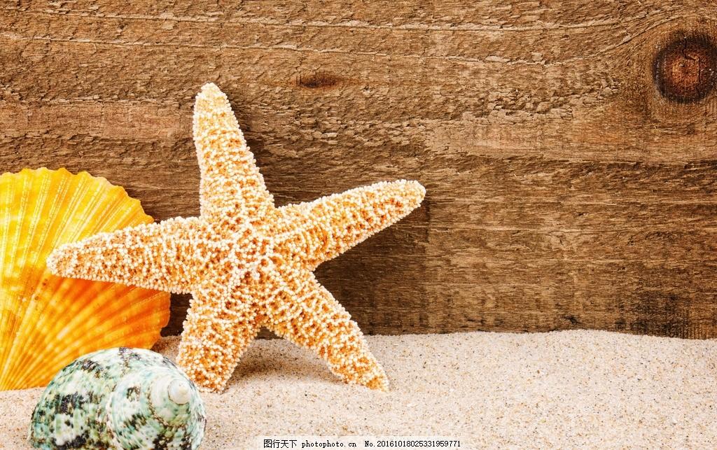 海星 五角星 海洋生物 贝壳 五彩贝壳 彩色贝壳 海贝壳 贝壳素材 聚会