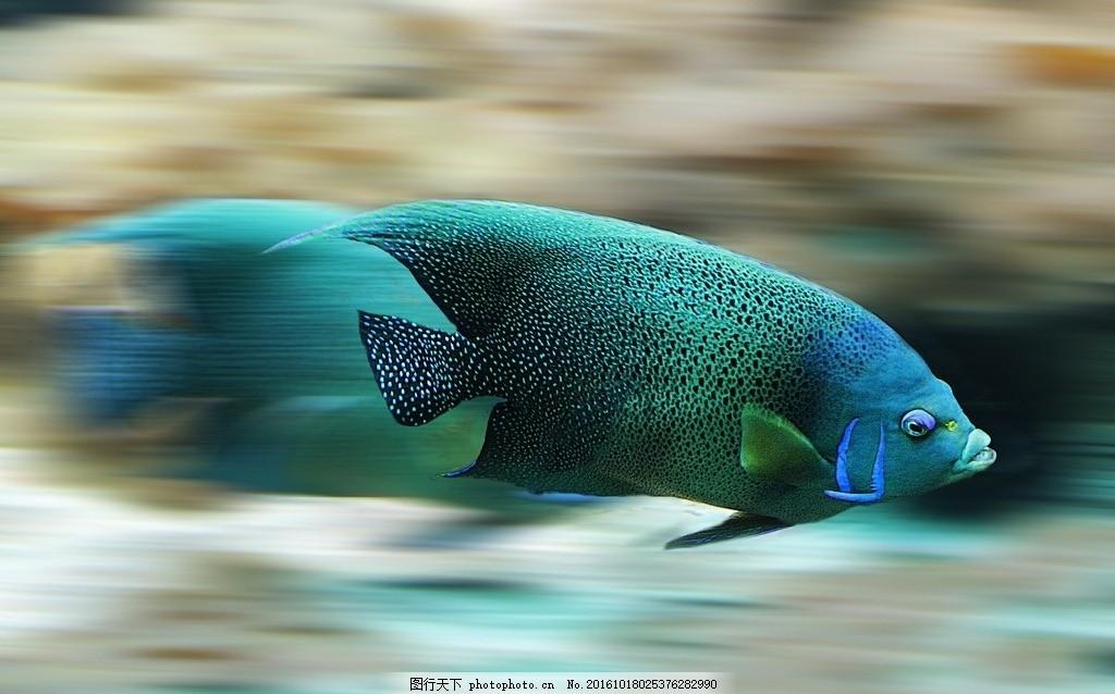 海底生物 海洋 鱼类 鱼儿 大海 乡村风采 摄影