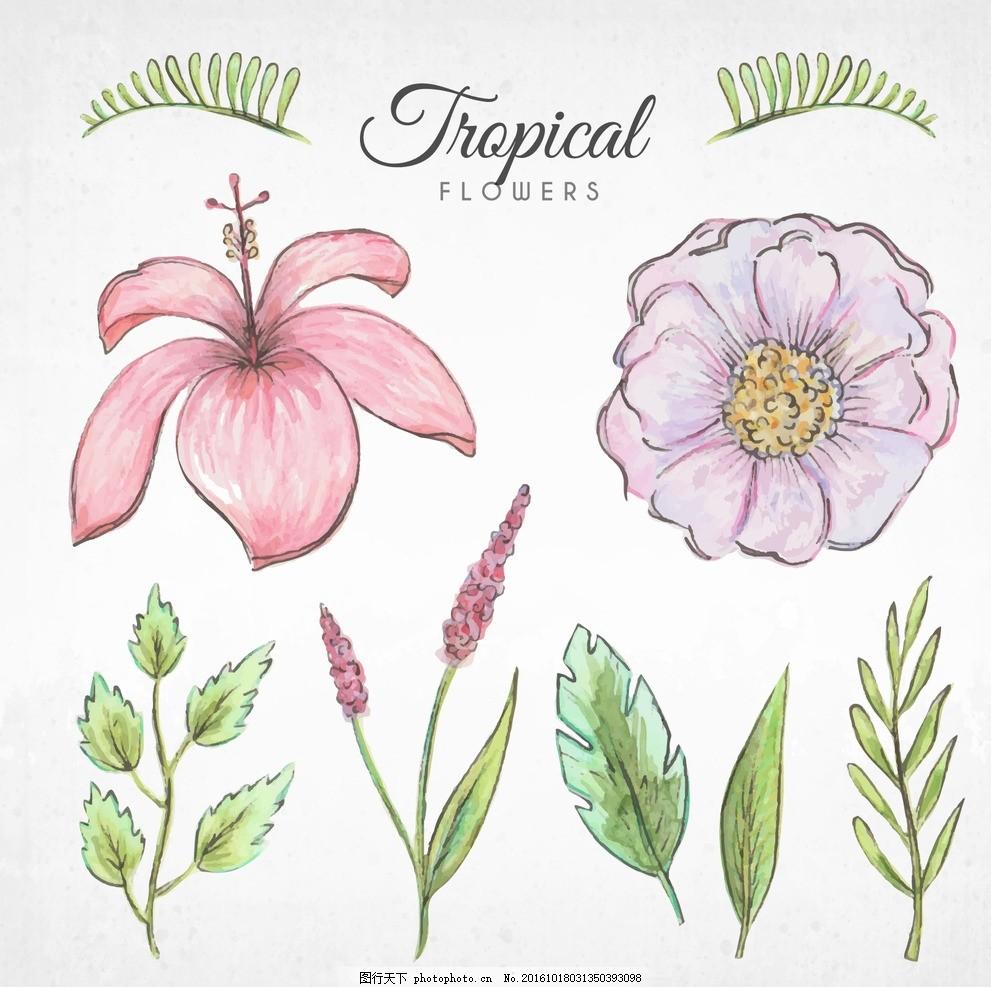 手绘热带花卉