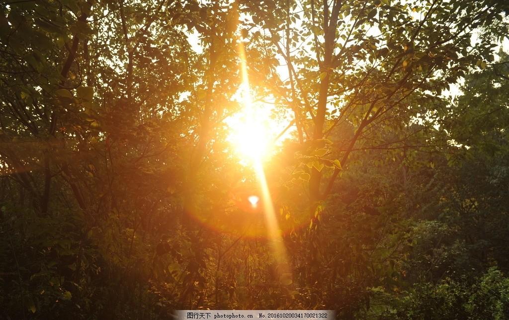 太阳 阳光 树林 森林 透光 光线 风景 摄影 旅游摄影 自然风景 300dpi