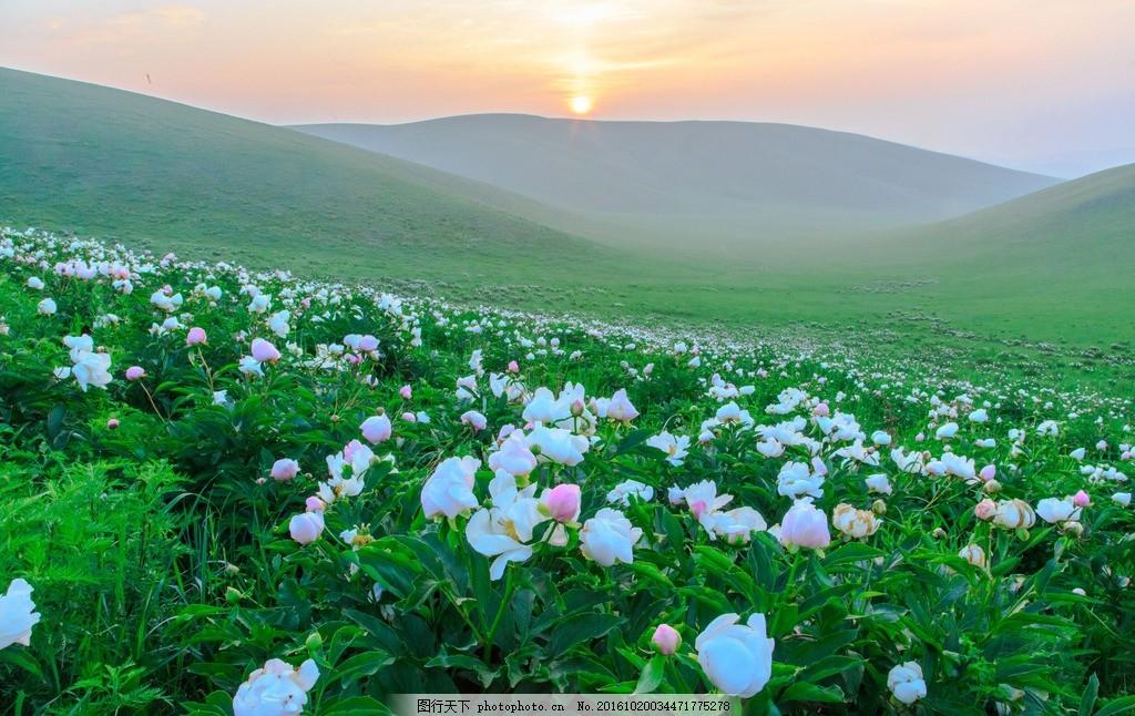 了望山 芍药花 西乌旗 草原 风景 摄影 摄影 自然景观 山水风景 2000