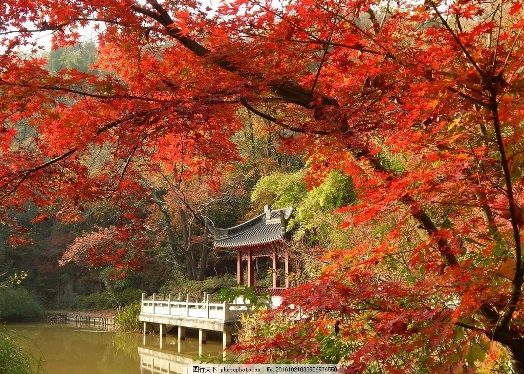 壁纸 枫叶 风景 红枫 树 1024_731