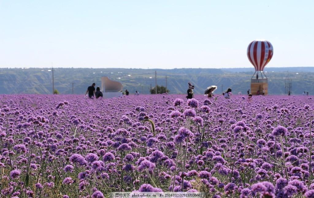 薰衣草花海 薰衣草 庄园 风景 背景图 欧式风情 花 花海 普罗旺斯