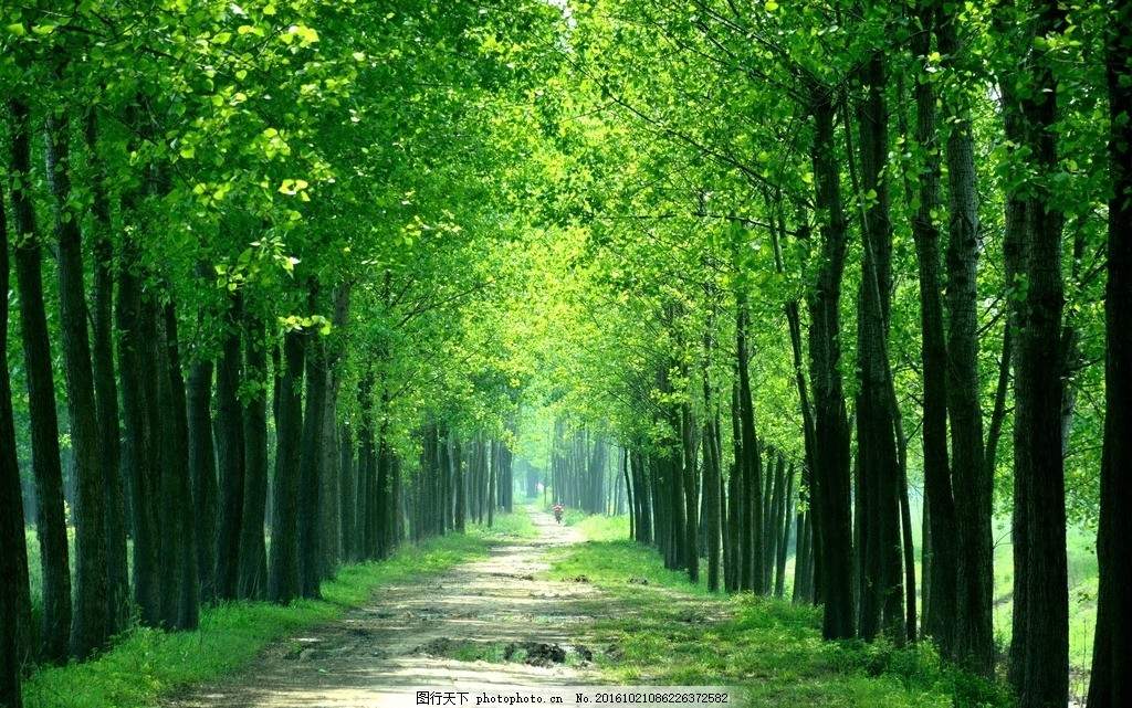 翠绿的树木 树林 林荫小路 环境优雅 草地 风景图片 田园风光
