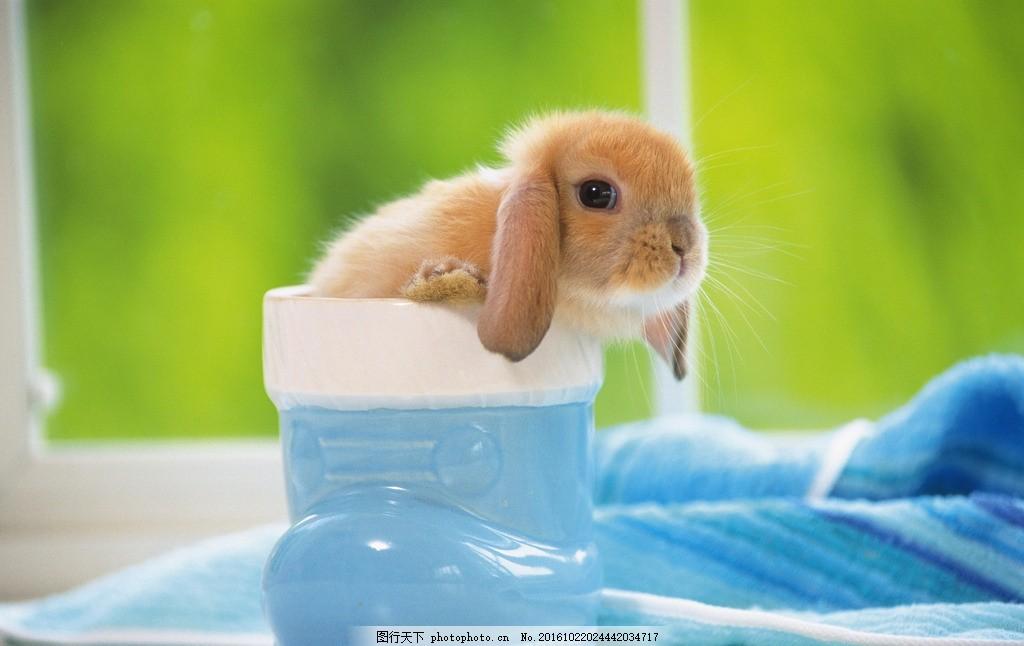 小田鼠 可爱 室内 容器 房屋 自然生物 摄影 生物世界 野生动物 350dp