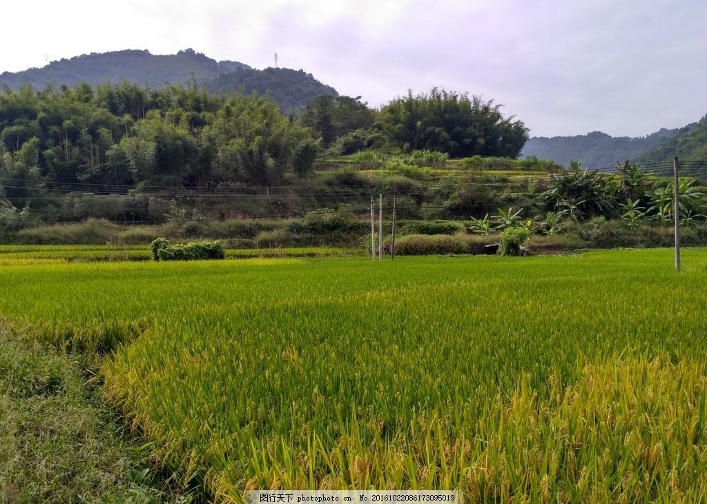 山川田野 田野 田园 农田 稻田 田 乡村 山川 自然景观 摄影 自然景观