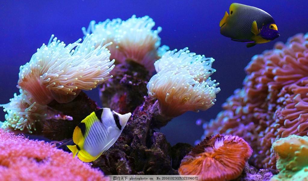 海洋世界 海底世界 珊瑚 珊瑚礁 彩色鱼 海洋鱼 彩色海鱼 自然风景