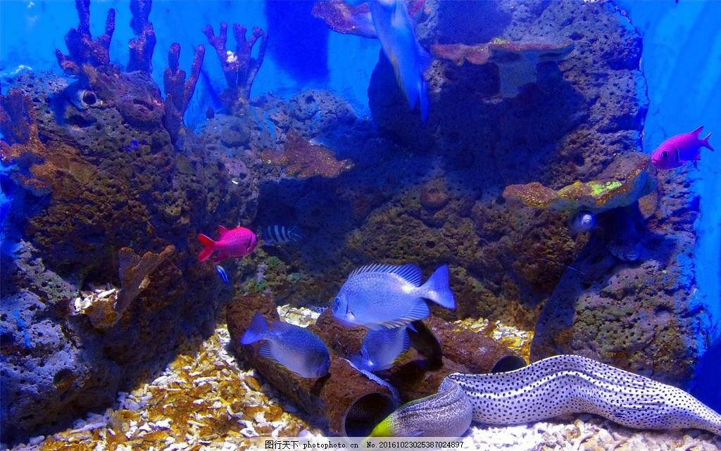 壁纸 海底 海底世界 海洋馆 水族馆 桌面 1024_641