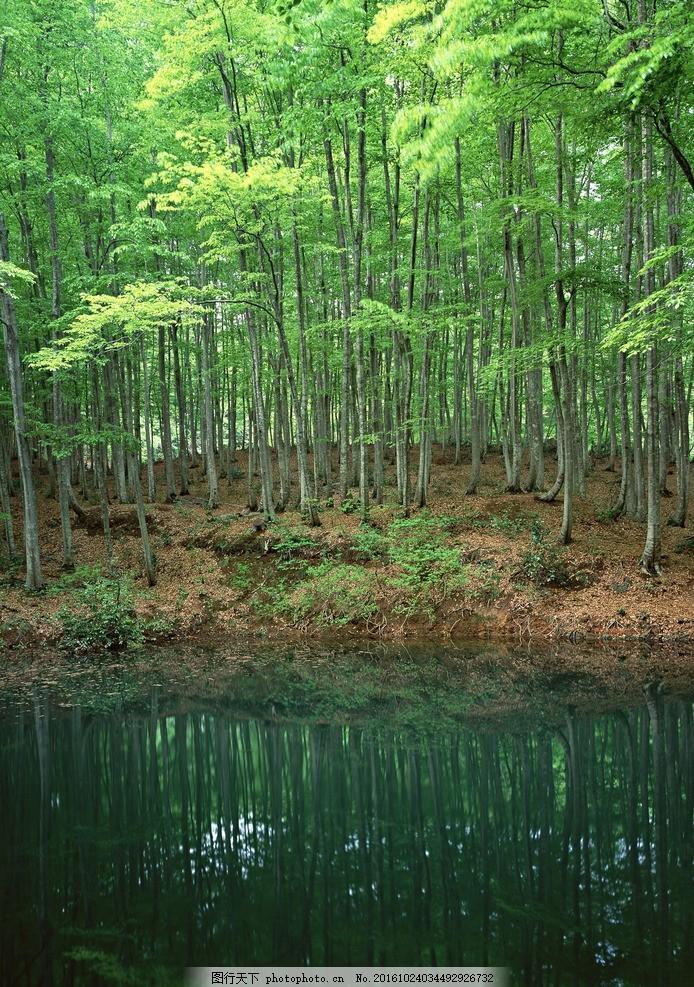 树林 绿地 植物 草地 风景 树木 摄影 湖水 摄影 自然景观 山水风景