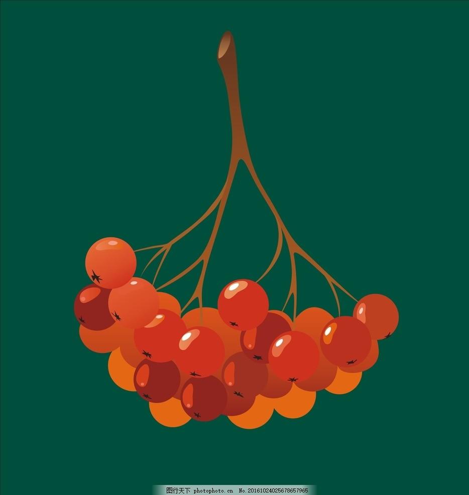 红果子 樱桃 水果 秋天 圣诞果