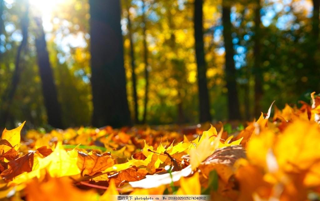 落叶 秋天 阳光 风景 树林 摄影