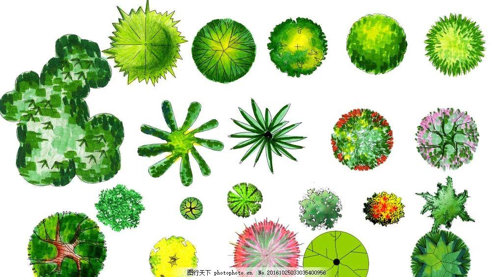 命名清晰 设计常用植物 植物平面图 彩色植物图例 植物立面 植物素材