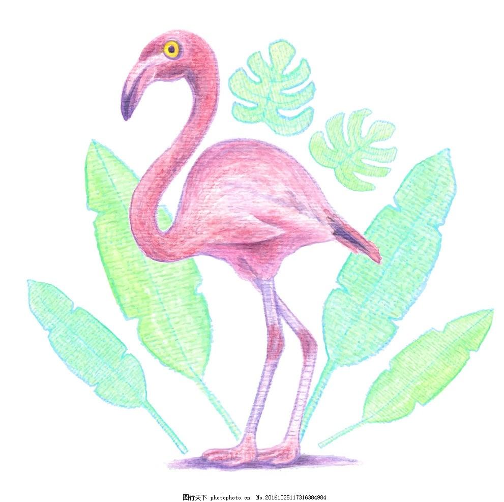 水彩火烈鸟 水彩 自然 动物 热带 火烈鸟 野生 野生动物 异国情调