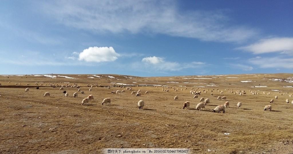 青藏高原 西藏 拉萨 草原 高原 羊群 摄影 自然景观 山水风景 72dpi j