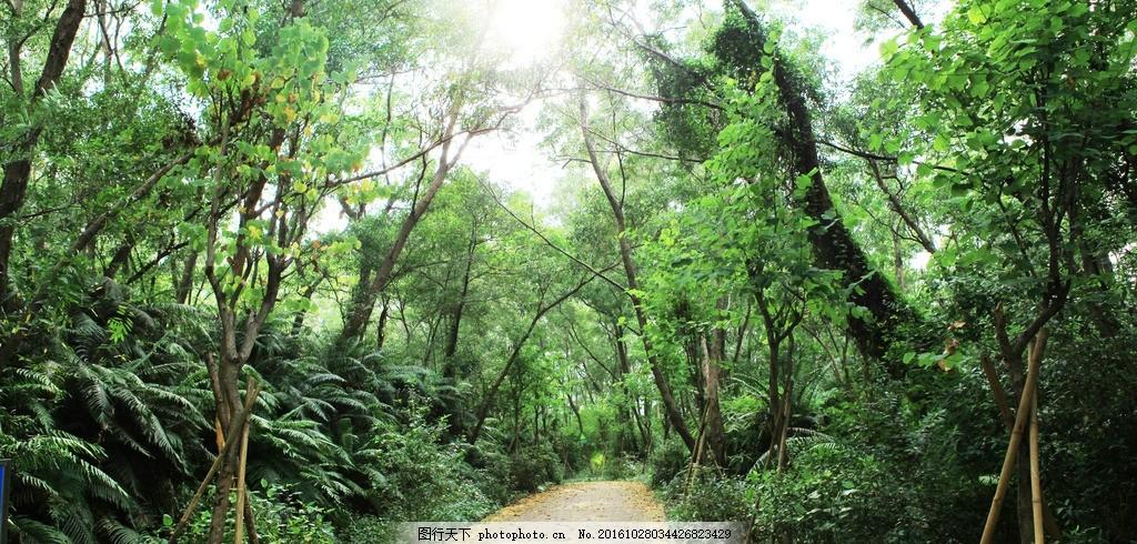 森林绿道 芙蓉嶂 芙蓉嶂森林 公园 摄影