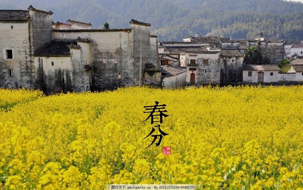 24节气春分 春分 节气 24节气 油菜花 房屋 摄影 自然景观 自然风景