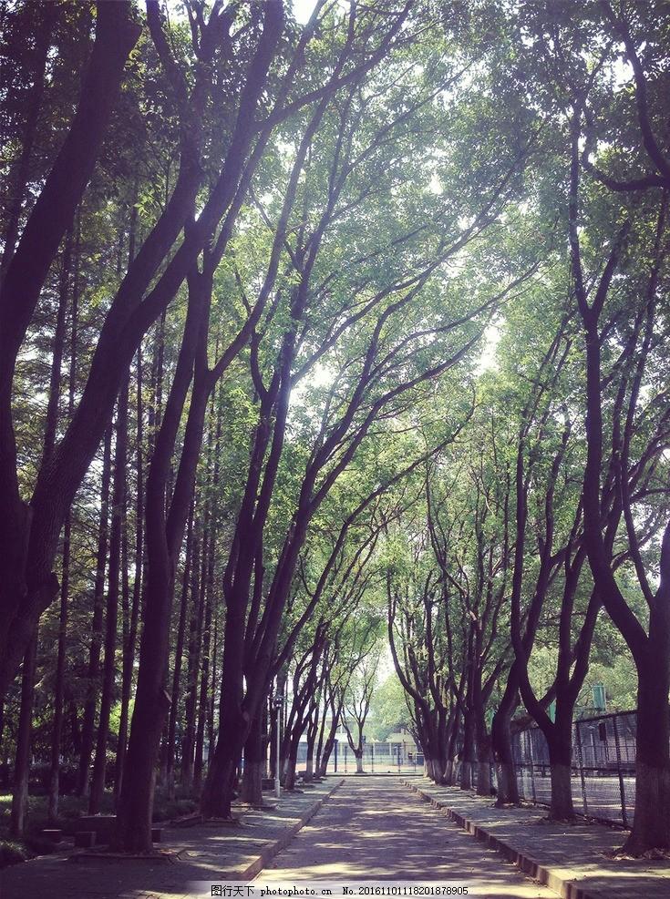 林间小道 嘉兴学院 嘉兴 校园 道路 自然风光 摄影 自然景观 自然风景