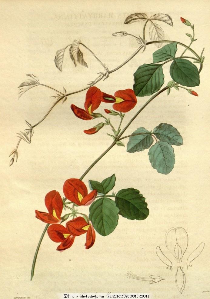 手绘花卉 复古 水彩 纸张 植物 绘画 写实 水粉