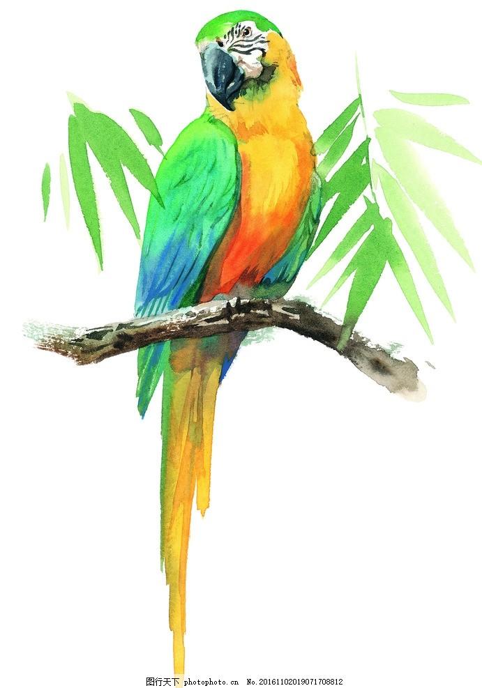 水彩鹦鹉 手绘 金刚鹦鹉 树枝 热带 热带鸟