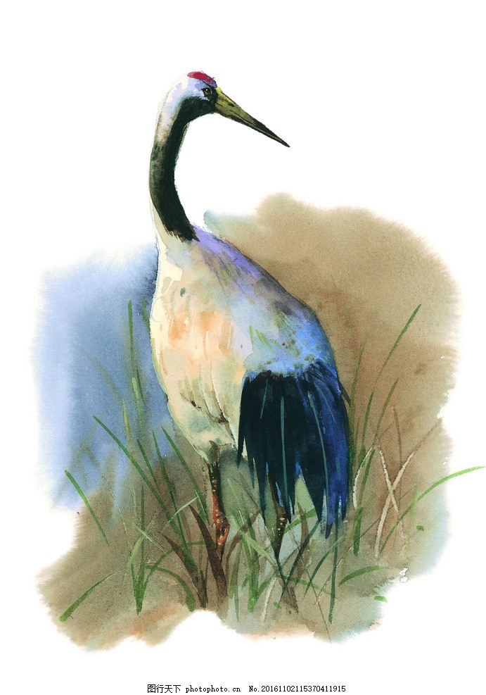 水彩仙鹤 手绘 芦苇 文化艺术 绘画书法