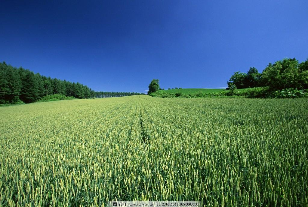 绿色小麦 绚丽背景 梦幻背景 模糊背景 底纹背景 水彩背景 渐变背景