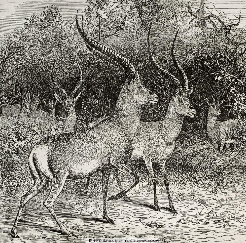 印象油画 装饰油画 流行艺术 popart 唯美 墙纸 素描 铅笔画 动物 鹿