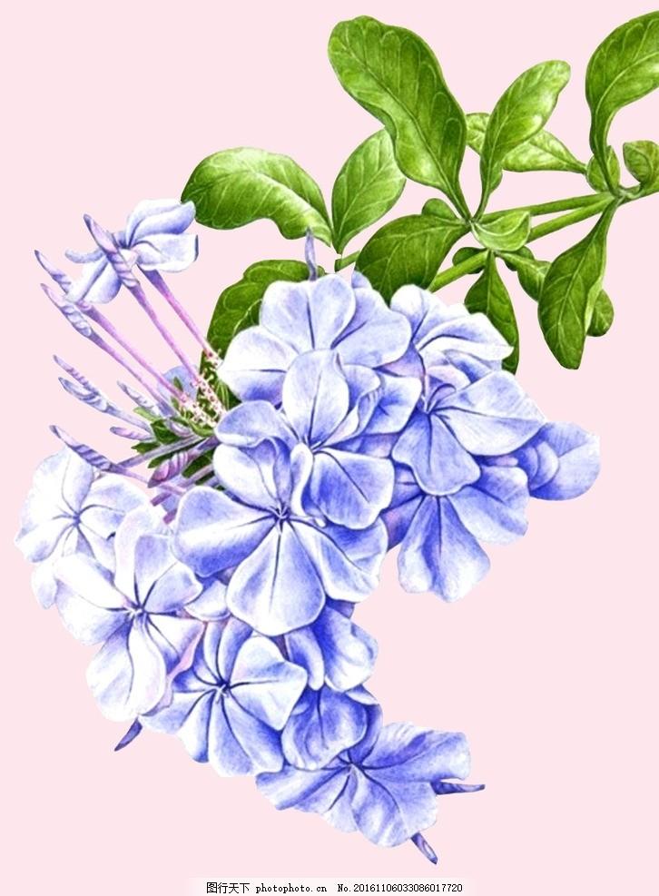 花卉 小清新花卉 手绘花卉 已扣素材 设计素材