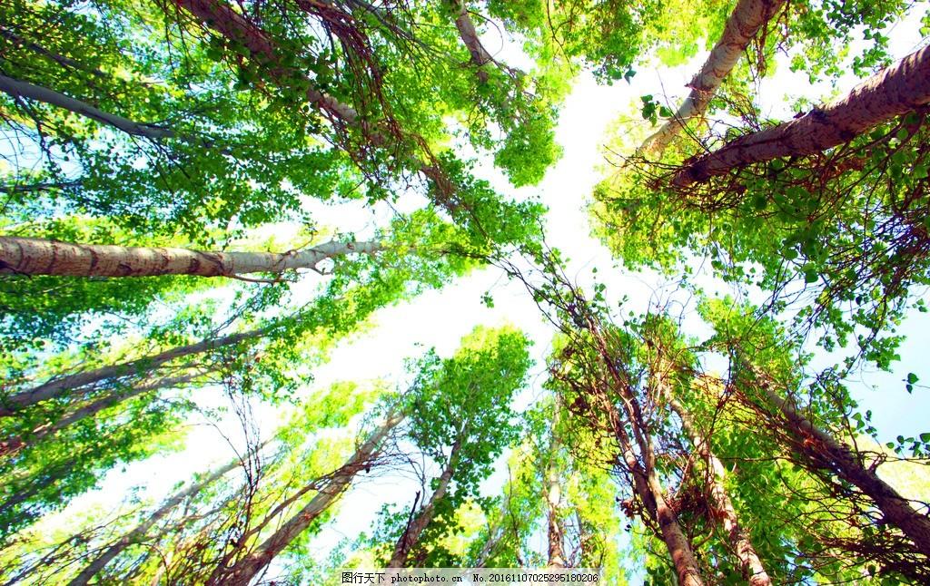 达坂城 杨树 树林 绿色 春天 美景 摄影 生物世界 树木树叶 72dpi jpg