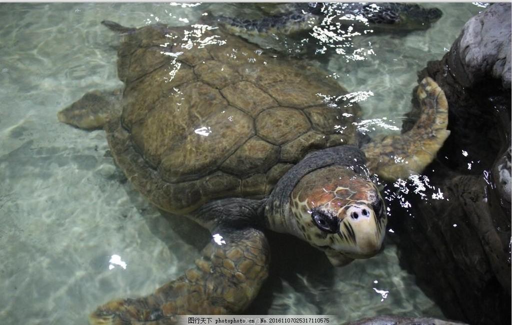 海底世界 海水 乌龟 特写 动物 海底动物 摄影 旅游 海龟 海底世界
