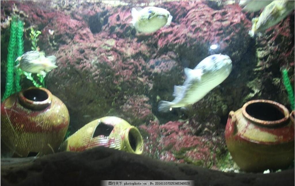 怪鱼 海底世界 海水 假山 特写 动物 海底动物 摄影 旅游 罐子