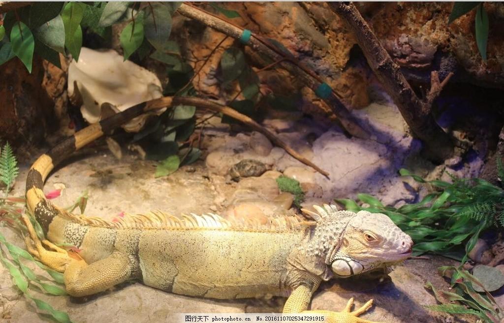 动物园 蜥蜴 黄色 假山 池水 石头 光线 旅游 展览 摄影 海底世界