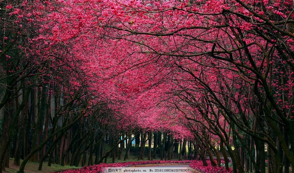 花树 大树 树林 小路 林间小道 树林背景 风景 摄影 自然景观 自然