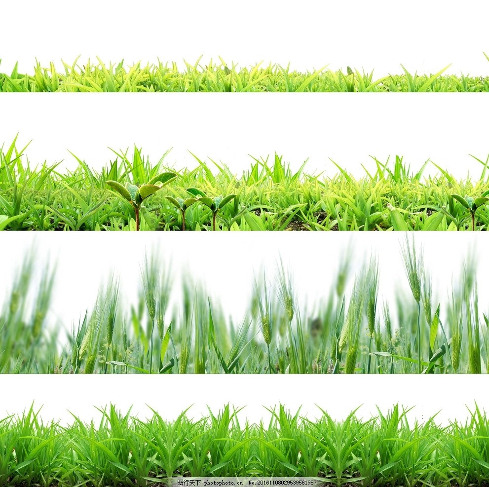 小草 麦子 手绘素材 矢量 花草 草地 小草素材 草地素材 绿色小草