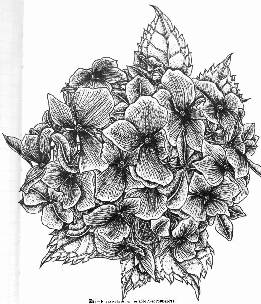 绣球花 花卉 插画 白描 黑白画