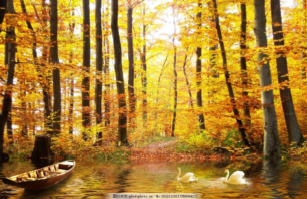 秋景 秋天 小木船 天鹅 湖面 水波 倒影 黄色树林 大自然 美丽 风景